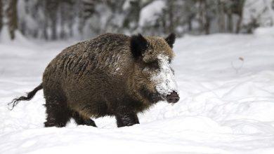 Tarnowskie Góry: w lasach będzie niebezpiecznie! Szykuje się polowanie