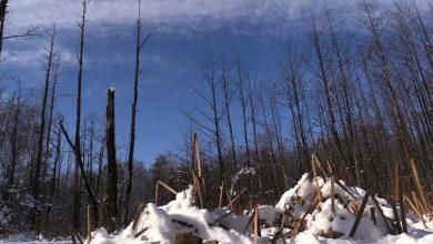 Duża wycinka drzew trwa w Katowickim Parku Leśnym. Trwa usuwanie ok. tysiąca drzew na Muchowcu i w Dolinie Trzech Stawów