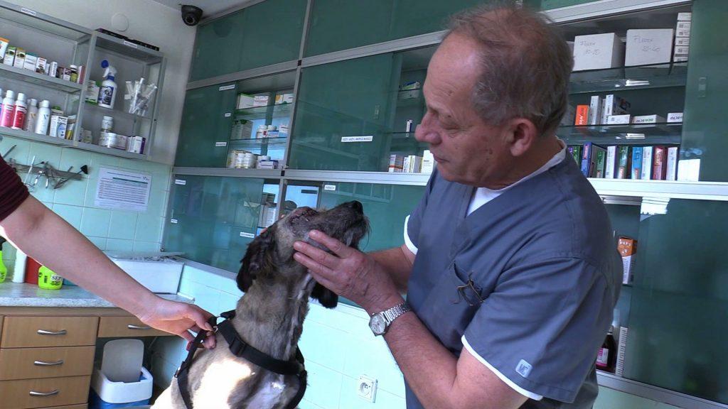Psa w takim stanie lekarz weterynarii Krzysztof Czogała dawno nie pamięta. Odebrany został z posesji w Sarnowie koło Będzina