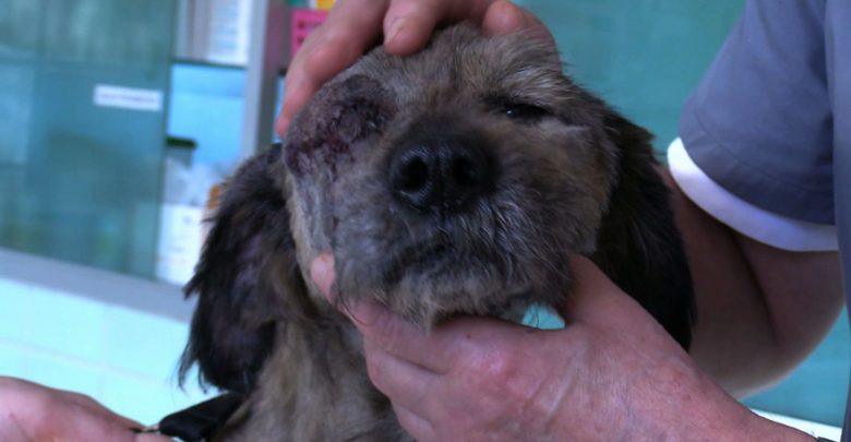 Katowice: Ratują psa zabranego spod Będzina. Weterynarze przerażeni stanem Tiny!