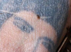 Tajemniczy wypadek na Śląsku! Policja publikuje zdjęcia tatuaży i prosi o pomoc [ZDJĘCIA]