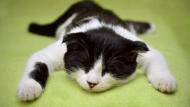 Podczas domowej awantury brutalnie zabił kota, później wyrzucił go przez okno (fot.poglądowe/www.pixabay.com)