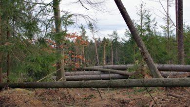 Drzewo spadło na 45-latka. Mężczyzna nie żyje (fot.poglądowe/www.pixabay.com)