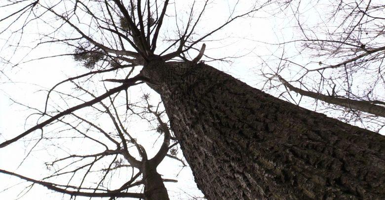 1200 drzew do wycinki pod budowę przy Parku Śląskim?