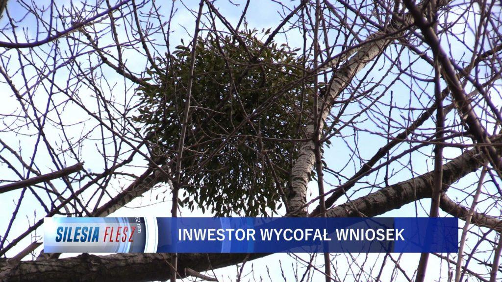 Inwestor, który planował budowę osiedla przy Parku Śląskim złożył do Urzędu Miasta w Chorzowie wniosek o wycinkę ponad 1200 drzew
