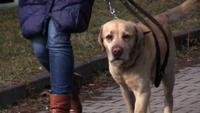 Interwencja Silesia Flesz: Ktoś truje psy w Jaworznie! Co na to policja? [WIDEO]