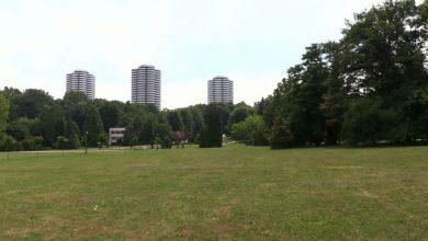 Czy Park Śląski otrzyma ochronę ustawową? Kolejne działania koalicji stowarzyszeń