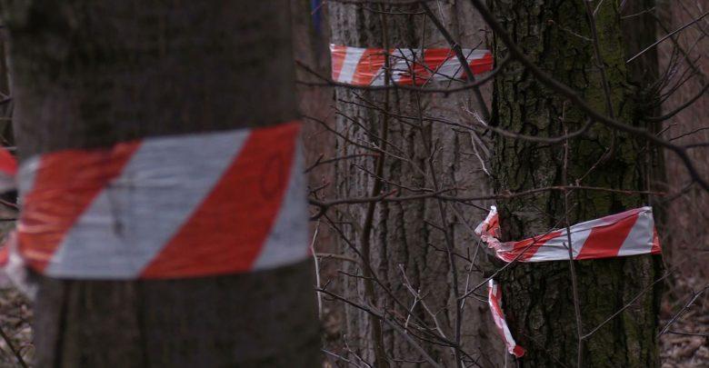 Chorzów: Pawilony zamiast drzew przy Parku Śląskim? Są kolejne petycje!