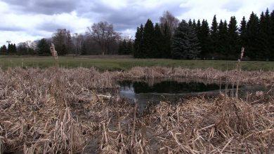 W Parku Śląskim znaleziono rozkładające się zwłoki. Do makabrycznego odkrycia doszło wczoraj, 10 marca, w rosarium.
