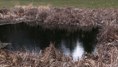 Zwłoki odkryte w Parku Śląskim. To zaginiony mieszkaniec Katowic?