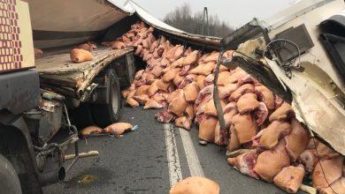 Ruda Śląska; Świnie wysypały się na drogę! Dojazd do autostrady A4 całkowicie zablokowany! (fot.Paweł Jędrusik)