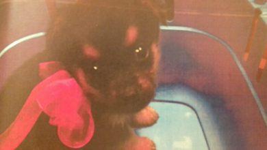 Zabrze: bezwzględna kobieta handlowała szczeniakami. Zwierzęta umierały kilka dni od zakupu