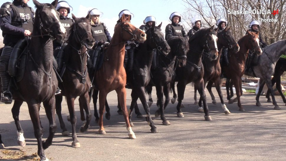 Policyjni jeźdźcy z chorzowskiej i częstochowskiej jednostki ćwiczyli wspólnie z nieetatowym pododdziałem chorzowskiej policji fot. KWP Katowice