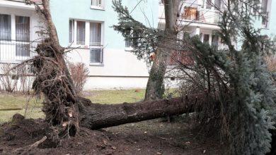 Ponad 100 dachów zerwanych, tysiące drzew powalonych! Silny wiatr znowu siał zniszczenie!