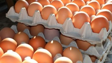 GIS znowu OSTRZEGA! Salmonella na jajkach!