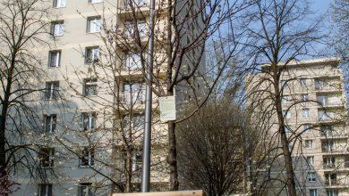 Katowice: Mieszkańcy znowu mogą zgłaszać miejsca na nowe drzewa (fot.UM Katowice)