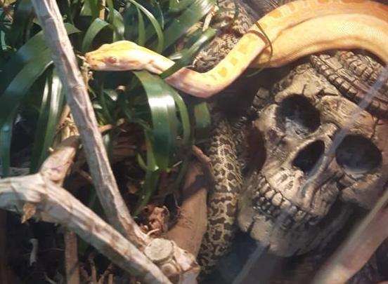 Sprzedawał egzotyczne zwierzęta zagrożone wyginięciem. Mieszkańcowi Katowic grozi do 5 lat więzienia (fot.policja.pl)