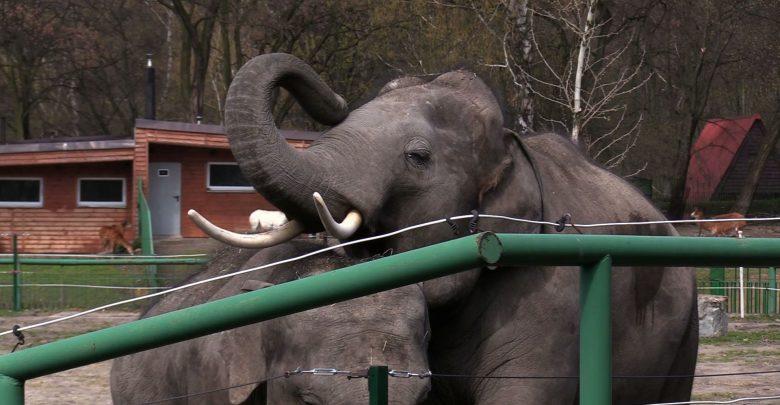 W śląskim zoo obchodzono dziś Dzień Ochrony Słoni