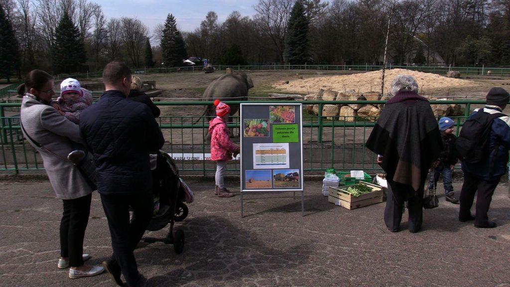 Dzień Ochrony Słoni zorganizował Śląski Ogród Zoologiczny