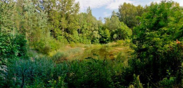 Sosnowiec: miliony złotych na Park Tysiąclecia w Milowicach