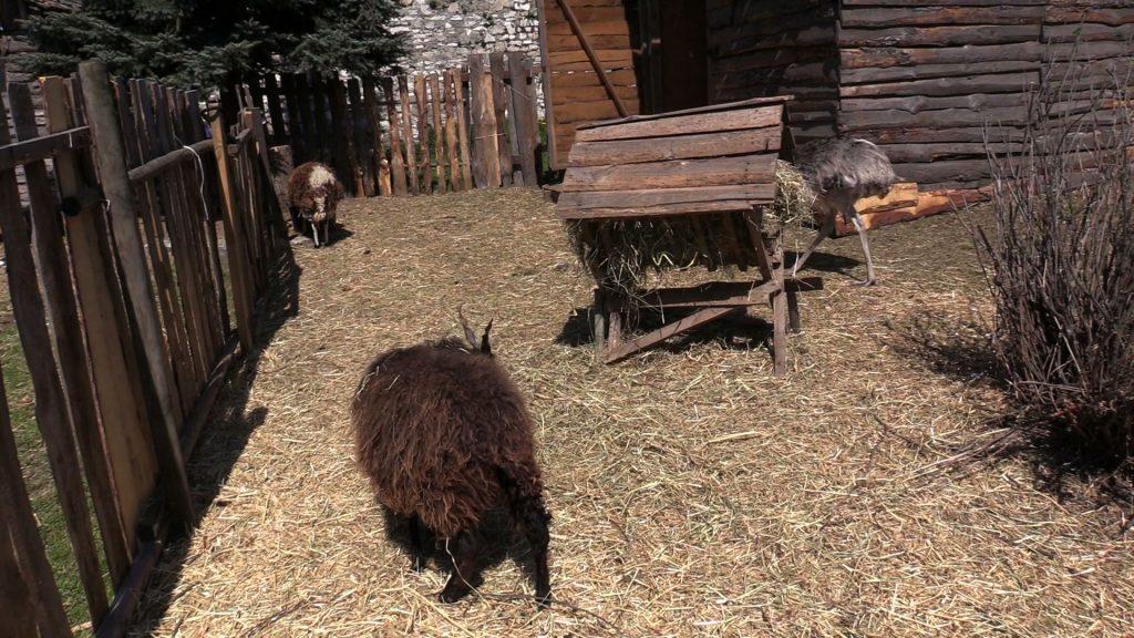 Mieszkańcy Zagłębia, którzy postanowili wybrać się na spacer, mogą zobaczyć zwierzęta w Zagajniku Wielkanocnym w pobliżu zamku w Będzinie