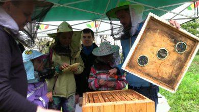 """Przeglądu wiosennego uli dokonali pszczelarze z Pasieki Edukacyjnej """"Skrzydlaci Przyjaciele"""" podczas warsztatów pszczelarskich w Śląskim Ogrodzie Botanicznym w Mikołowie"""