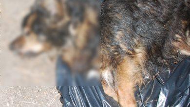 Jaworzno: zakopał psa żywcem. Szuka go policja [UWAGA, DRASTYCZNE ZDJĘCIA]