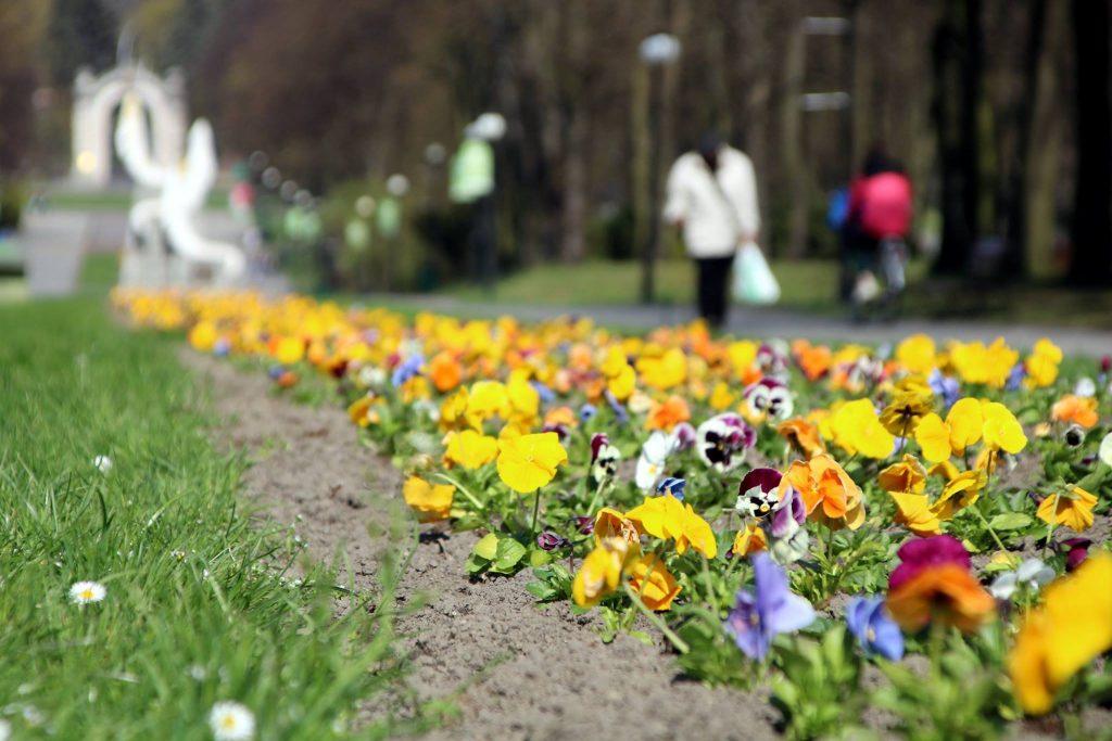 Ależ pięknie! Kwiaty zakwitły na Alei Żyrafy w Parku Śląskim. To już prawdziwa wiosna! (fot.Park Śląski/facebook)