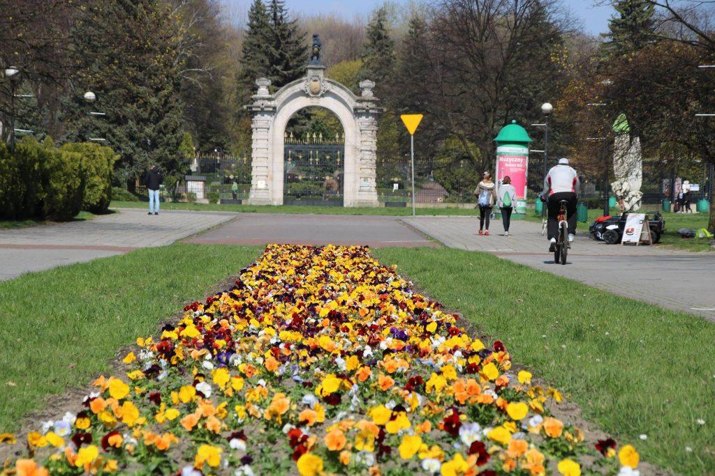 Kwiaty w Parku Śląskim zachwycają ferią barw! (fot. Park Śląski/facebook)