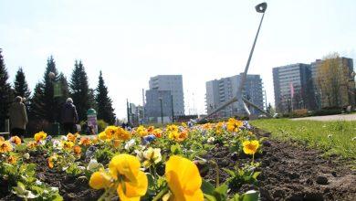 Kwiaty zakwitły w Parku Śląskim. Jest ich aż 14 tysięcy! (fot.Park Śląski/facebook)
