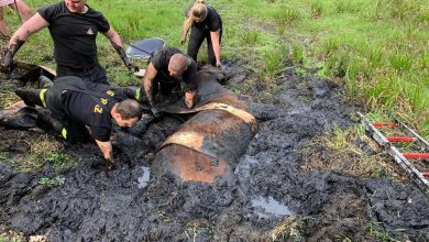 Bytom: Koń ugrzązł w błocie [ZDJĘCIA] Brawa dla strażaków, którzy pomogli zwierzęciu! (fot. Bytom998/fb)