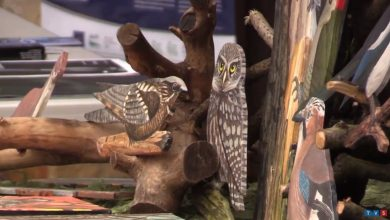 Jak żyją ptaki? Jak ewoluowały? [WIDEO] Międzynarodowy Dzień Ptaków w Mikołowie