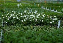POLSKIE ZNACZY DOBRE: Jak powstają sadzonki? Plantpol odpowiada!