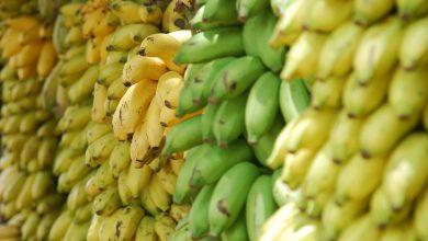 Wielki przemyt kokainy! Narkotyki w bananach z Ekwadoru(fot.poglądowe/www.pixabay.com)