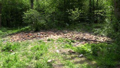 Śląskie: Coś okropnego! Tony gnijącego chleba, owoców i warzyw odkryte w środku lasu!
