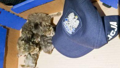 Ktoś wrzucił małe kotki do śmietnika. Przygarnął je policjant (fot.policja.pl)