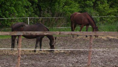 Fundacja Arkadia prosi o pomoc! Potrzebne środki na traktor. Bez niego pomoc zwierzętom to katorga!