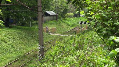 Mieszkańcy chcą ochronić drzewa przed rzezią! Kolej: To nie takie proste