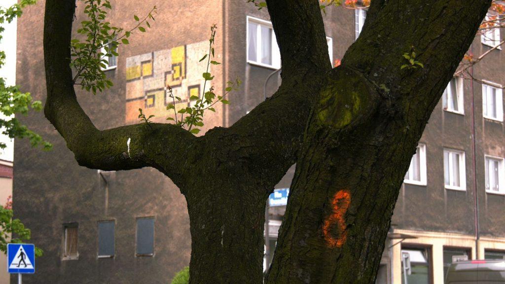 Katowiczanie są w szoku! Tauron chce wyciąć drzewa na Placu Grunwaldzkim!