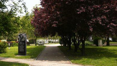 Drzewa na Placu Grunwaldzkim i wzdłuż ulicy Morcinka w Katowicach już ponumerowane. Powód? Mają iść pod topó