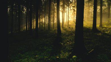 Śląskie: Wywieźli mężczyznę do lasu i pobili! Brutalny napad na mieszkańca Szczerbic (fot,pixabay.com))