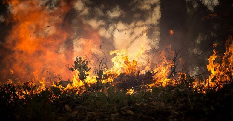 Płonący samochód w lesie. W środku znaleziono dwa ciała! (fot.poglądowe - pixabay.com)