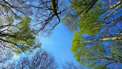 Katowice: Posadź dziecku drzewo. Niech rośnie razem z nim (fot.poglądowe/www.pixabay.com)