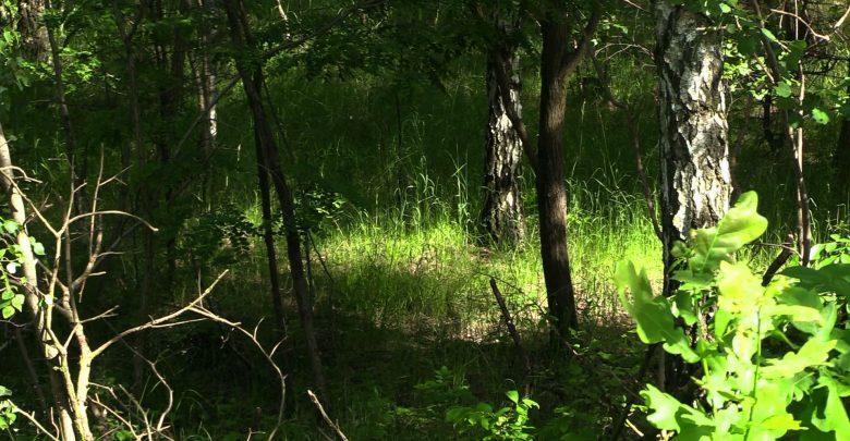 Morderstwo w Siemianowicach Śląskich?! Na nieużytkach znaleziono ciało mężczyzny