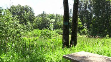 Sosnowiec rewitalizuje Park Tysiąclecia. Zielone płuca miasta odżyją!