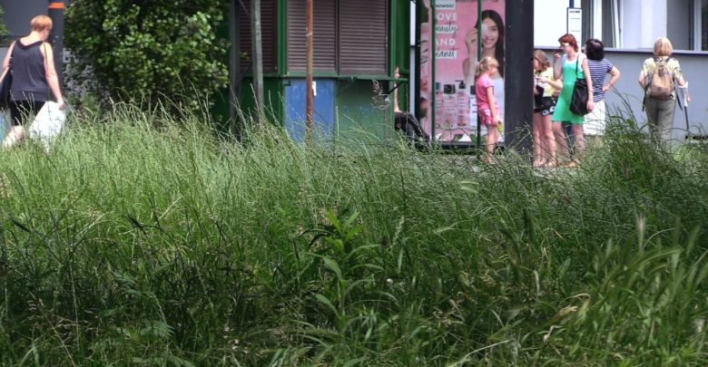 Świętochłowice: Mieszkańcy muszą sami kosić trawniki w mieście? Te są już jak dżungla!