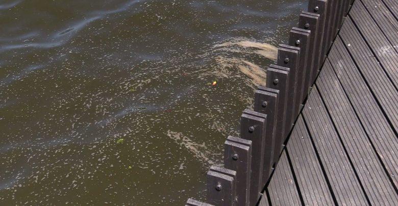 Pszczyna i Tychy walczą z sinicami. Wprowadzono zakazy kąpieli [WIDEO]