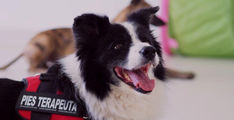 Dogoterapia tylko w Piekarach Śląskich! Psy pomagają w rehabilitacji dzieci