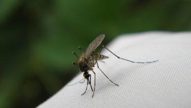 Sposoby na komary – czemu gryzą i co je odstrasza?