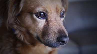 Co roku to samo! Policjanci z Rybnika uratowali zamkniętego w samochodzie psa (fot.poglądowe/www.pixabay.com)